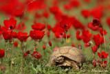 tortoise 2421