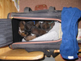 all puppies are sleeping tight.jpg