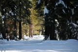 Dewey Point Trail