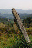 Vosges Fence Post