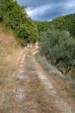 Valvori Olive Track