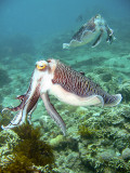 All Scuba Diving Pictures