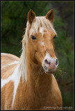 _ADR2262 horse cwf.jpg
