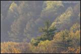 _MG_7397 trees wf.jpg