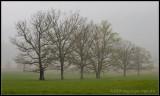 _ADR0887 foggy trees wf.jpg