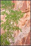 _ADR6763-cottonwood-canyon-wf.jpg