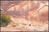_ADR6765 canyon wf.jpg