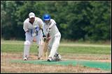 _cricket