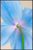 radiant blue.jpg