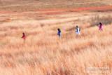 _ADR9372 big meadow run w.jpg