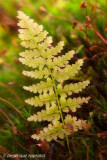 _ADR4392 fern and moss io w.jpg