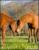 _ADR9952 horses wf.jpg