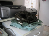 Protected Printer Covers