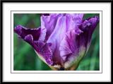 may 29 new iris
