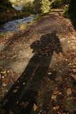 Water Leaves Shadows