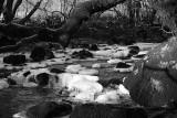 River 1 bw.jpg