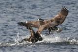 Goose 24.JPG