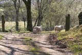 Sheep and Gateway.JPG