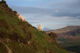Lambs on Hillside