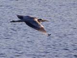 Flying Heron 2