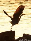 Free as a Bird III.jpg
