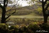 Llyn Cwm Bychan 2.jpg