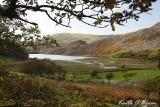 Llyn Cwm Bychan 3.jpg
