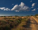 León, field