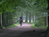 Horseman in Doorn - Ruiter in Doorn