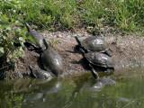 Schildpadden - Lesbos