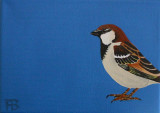 House Sparrow - Huismus