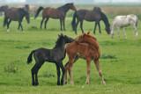 Paarden - Horses