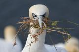 Birds of Helgoland