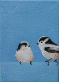 Long-tailed Tit - Staartmees