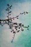 Blossom 1 - Bloesem 1