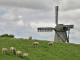 Windmill - Oudeschild - Texel - The Netherlands