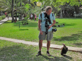 Chat with a Hooded Vulture in the gardens of the Senegambia Beach Hotel