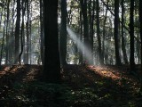 Early morning in the St. Jansberg Forest - Groesbeek - The Netherlands
