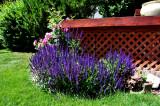 'Flower Garden' by Janet