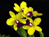 Orchids 2006 Vol. #1