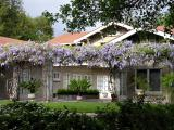 Wisteria at the Lanterman House