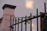 Padlocks on a Fence Prague