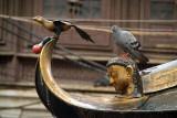Life Imitating Art Pigeon on Temple Roof