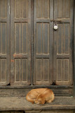 Sleeping Dog and Locked Door