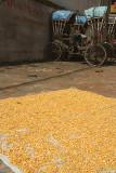 Corn Drying in the Sun Kathmandu