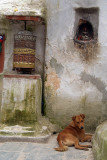 Prayer Wheel and Dog by Boudha Stupa.jpg