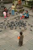 Feeding the Pigeons at Kathesimbhu