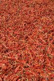 Red Chilies Drying Kathmandu 02