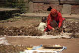 Drying Peas Bhaktapur