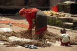 Drying Peas Bhaktapur 02